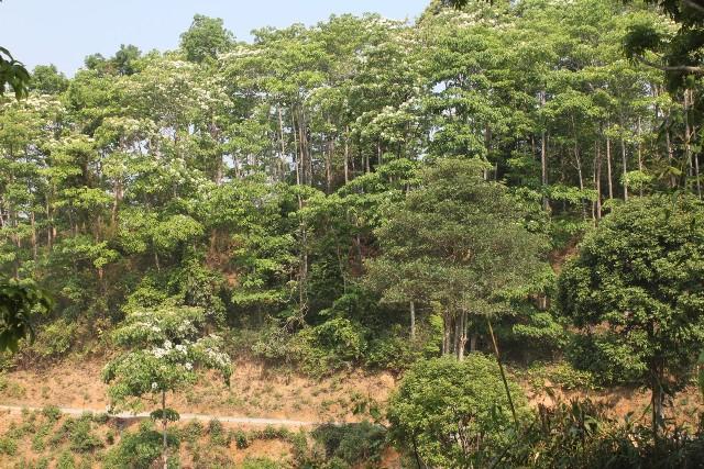 Lai Châu: Nâng cao hiệu quả bảo vệ, phát triển rừng
